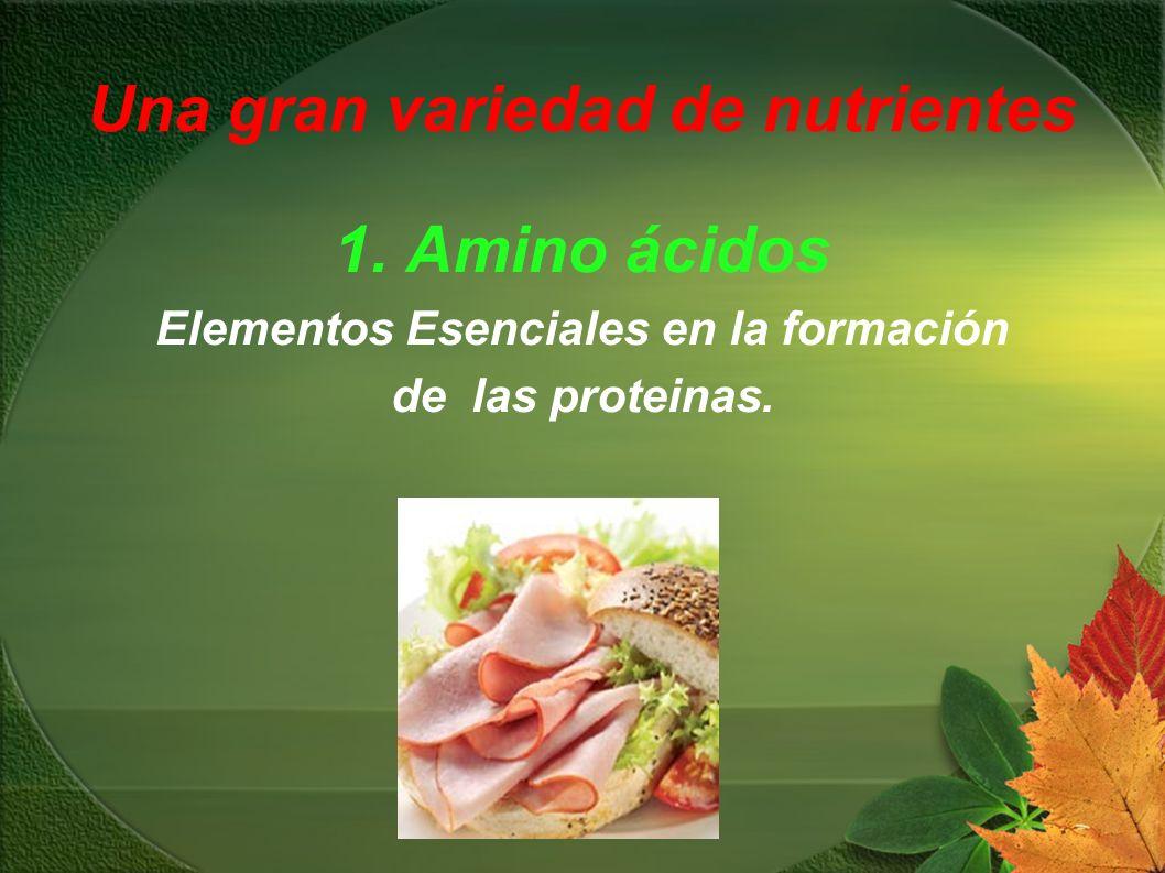 Una gran variedad de nutrientes 1. Amino ácidos Elementos Esenciales en la formación de las proteinas.