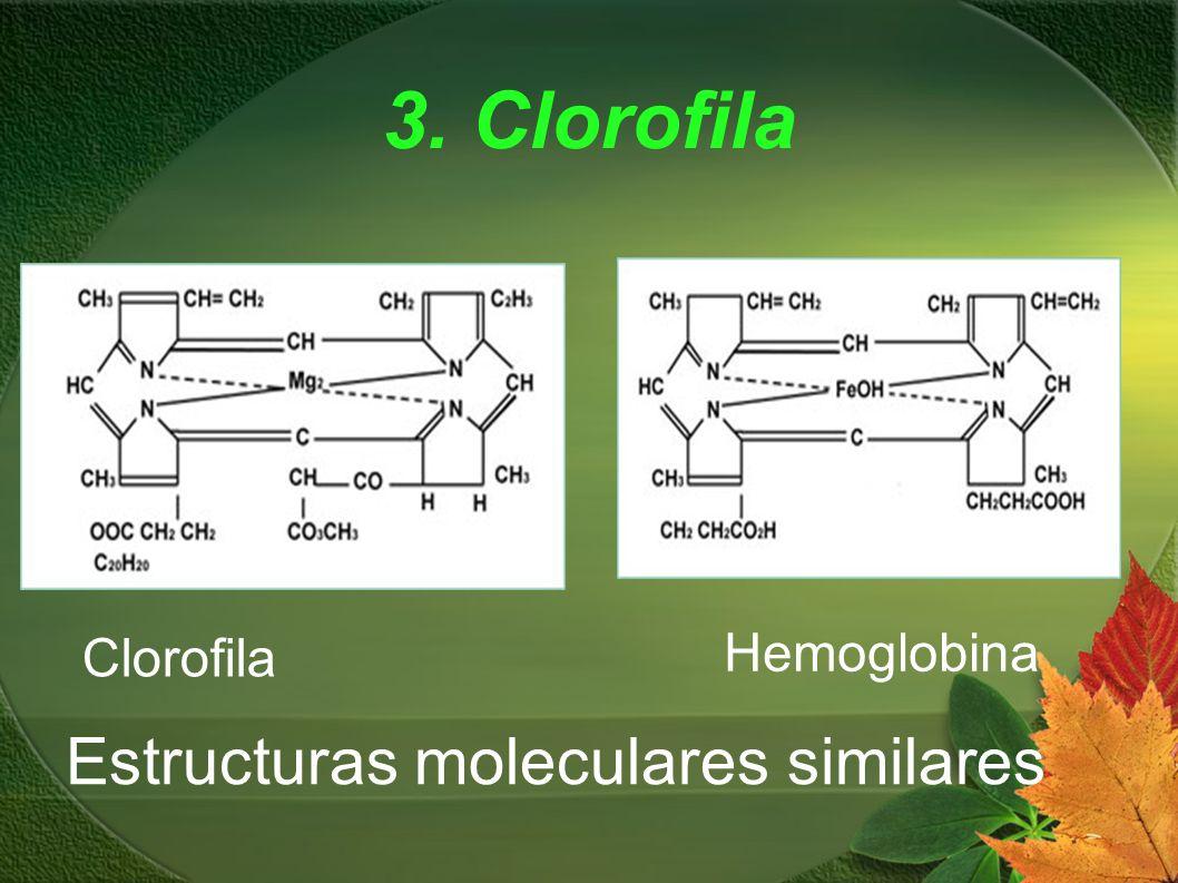 3. Clorofila Hemoglobina Clorofila Estructuras moleculares similares