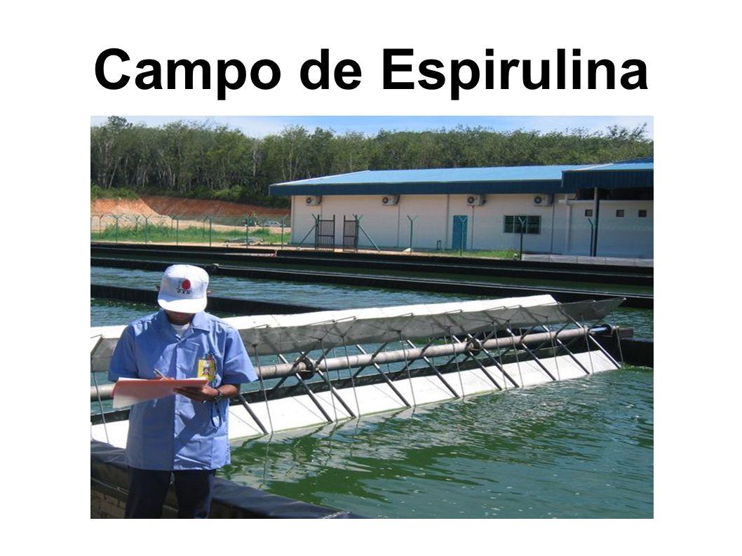 Campo de Espirulina