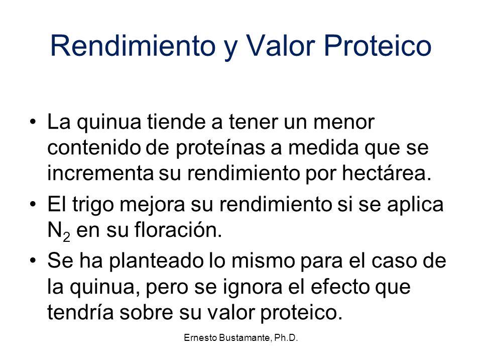 Rendimiento y Valor Proteico La quinua tiende a tener un menor contenido de proteínas a medida que se incrementa su rendimiento por hectárea. El trigo