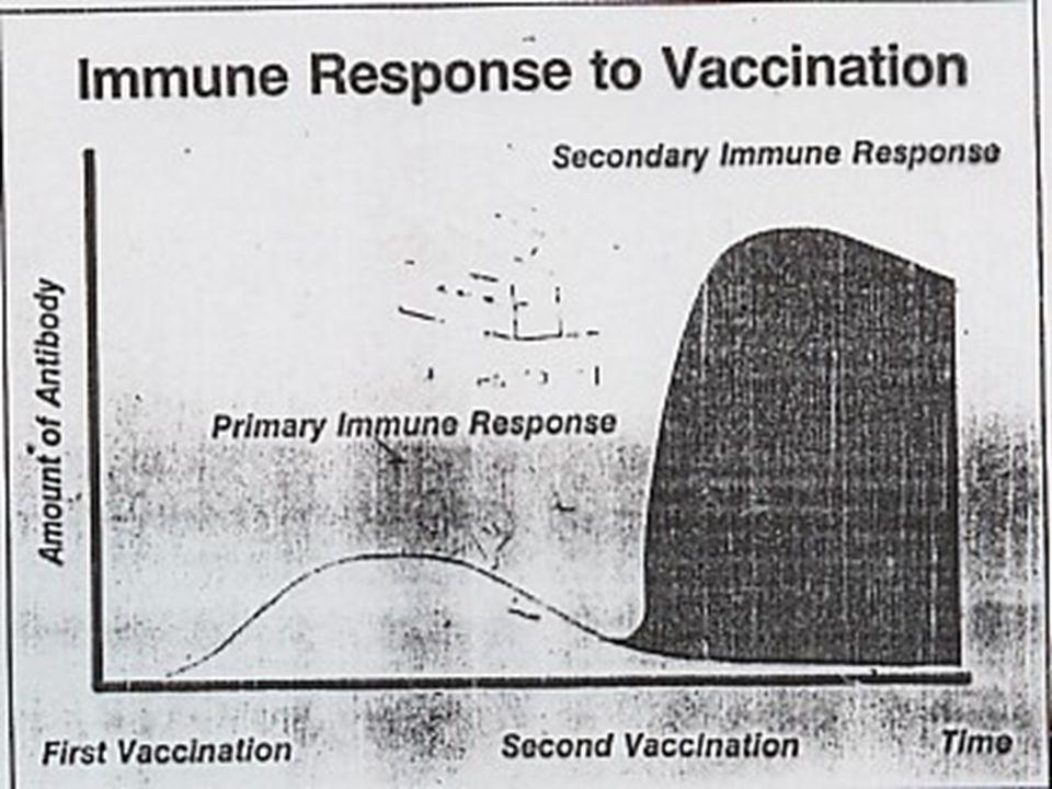 Calendario de transmisión de infecciones de la madre al lechón P.multocida A.