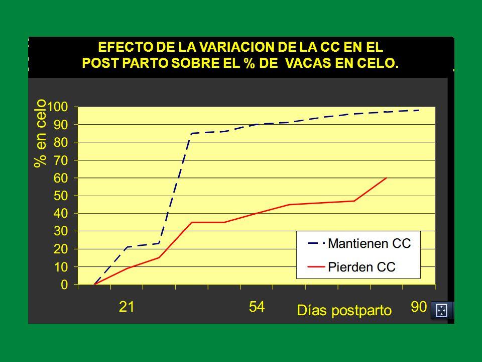EFECTO DE LA VARIACION DE LA CC EN EL POST PARTO SOBRE EL % DE VACAS EN CELO.