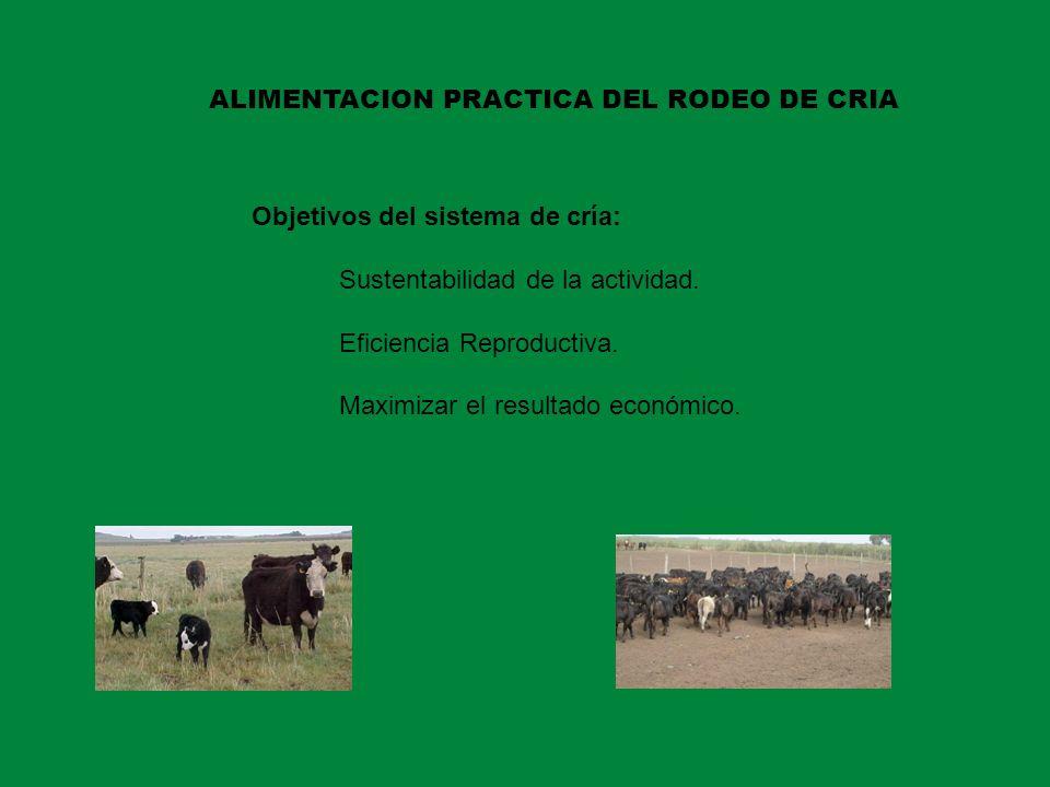 Objetivos del sistema de cría: Sustentabilidad de la actividad. Eficiencia Reproductiva. Maximizar el resultado económico. ALIMENTACION PRACTICA DEL R