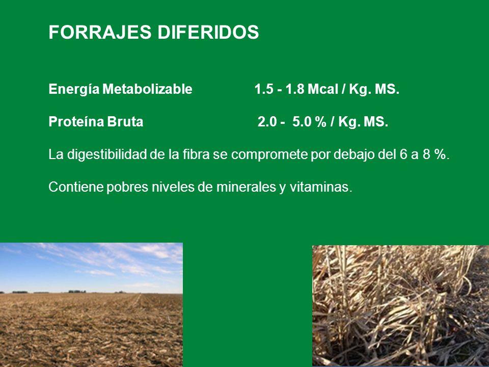 FORRAJES DIFERIDOS Energía Metabolizable 1.5 - 1.8 Mcal / Kg. MS. Proteína Bruta 2.0 - 5.0 % / Kg. MS. La digestibilidad de la fibra se compromete por
