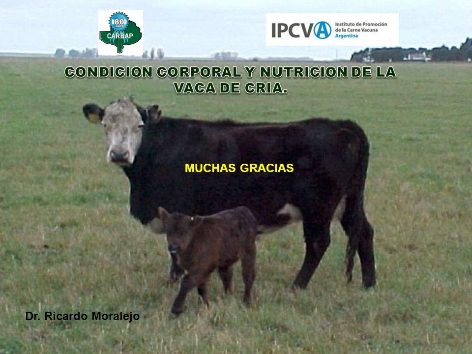Dr. Ricardo Moralejo MUCHAS GRACIAS