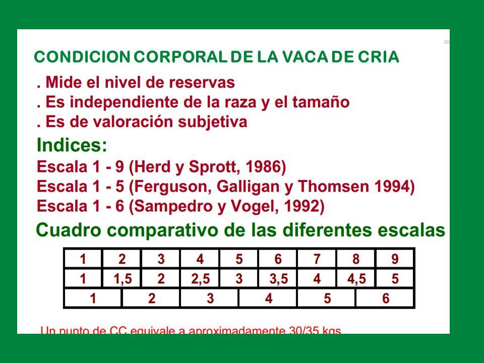 CONDICION CORPORAL DE LA VACA DE CRIA