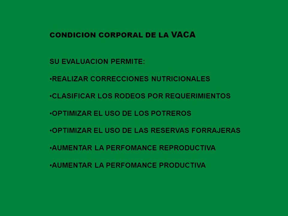 CONDICION CORPORAL DE LA VACA SU EVALUACION PERMITE: REALIZAR CORRECCIONES NUTRICIONALES CLASIFICAR LOS RODEOS POR REQUERIMIENTOS OPTIMIZAR EL USO DE