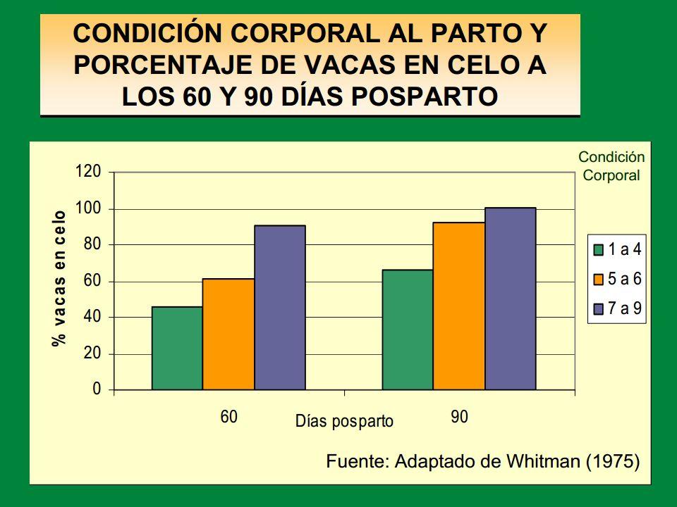 EDAD: Categorías Terneros: 60 - 100 kg. 100 - 140 kg. 140 - 180 kg. 180 - 220 kg.