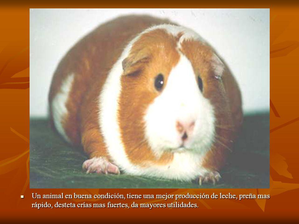 Un animal en buena condición, tiene una mejor producción de leche, preña mas rápido, desteta crías mas fuertes, da mayores utilidades. Un animal en bu
