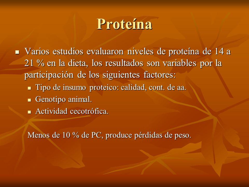 Proteína Varios estudios evaluaron niveles de proteína de 14 a 21 % en la dieta, los resultados son variables por la participación de los siguientes f