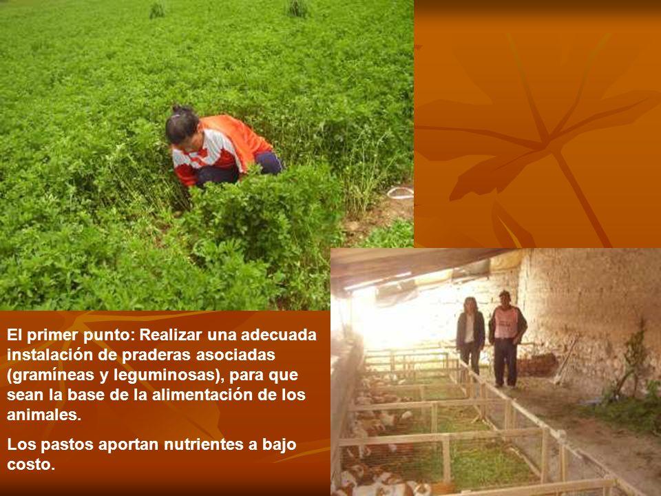 El primer punto: Realizar una adecuada instalación de praderas asociadas (gramíneas y leguminosas), para que sean la base de la alimentación de los an
