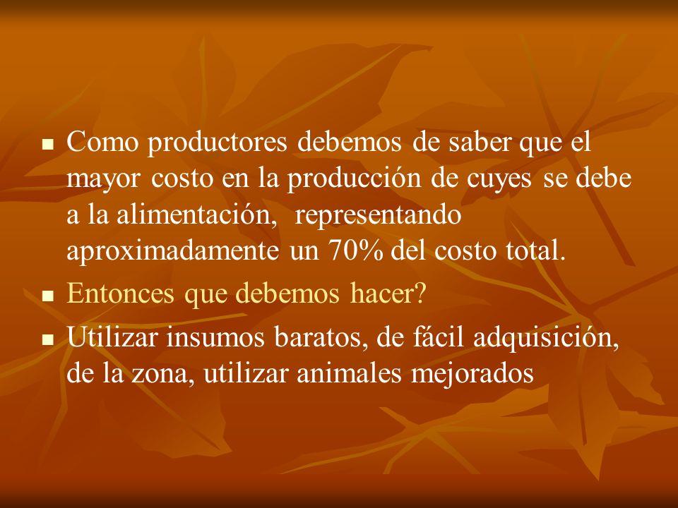 Como productores debemos de saber que el mayor costo en la producción de cuyes se debe a la alimentación, representando aproximadamente un 70% del cos
