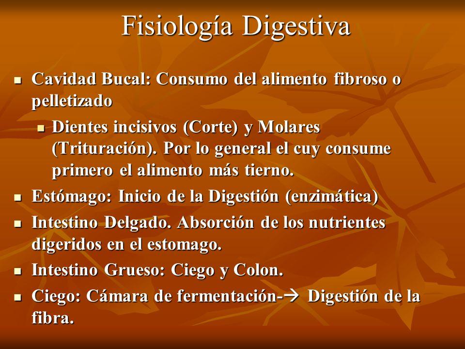 Fisiología Digestiva Cavidad Bucal: Consumo del alimento fibroso o pelletizado Cavidad Bucal: Consumo del alimento fibroso o pelletizado Dientes incis
