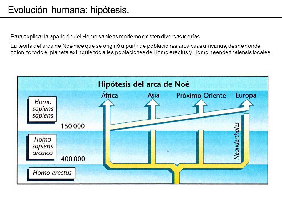 La hipótesis del candelabro propone que las poblaciones de Homosapiens moderno se fueron formando en distintas regiones de Eurasia a partir de diferentes poblaciones de Homo sapiens arcáico, a su vez proveniente de H.
