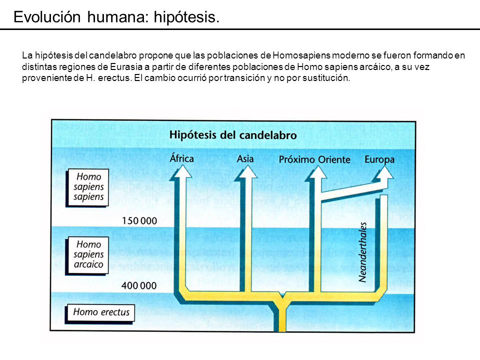 La hipótesis de evolución reticulada combina los dos modelos anteriores.