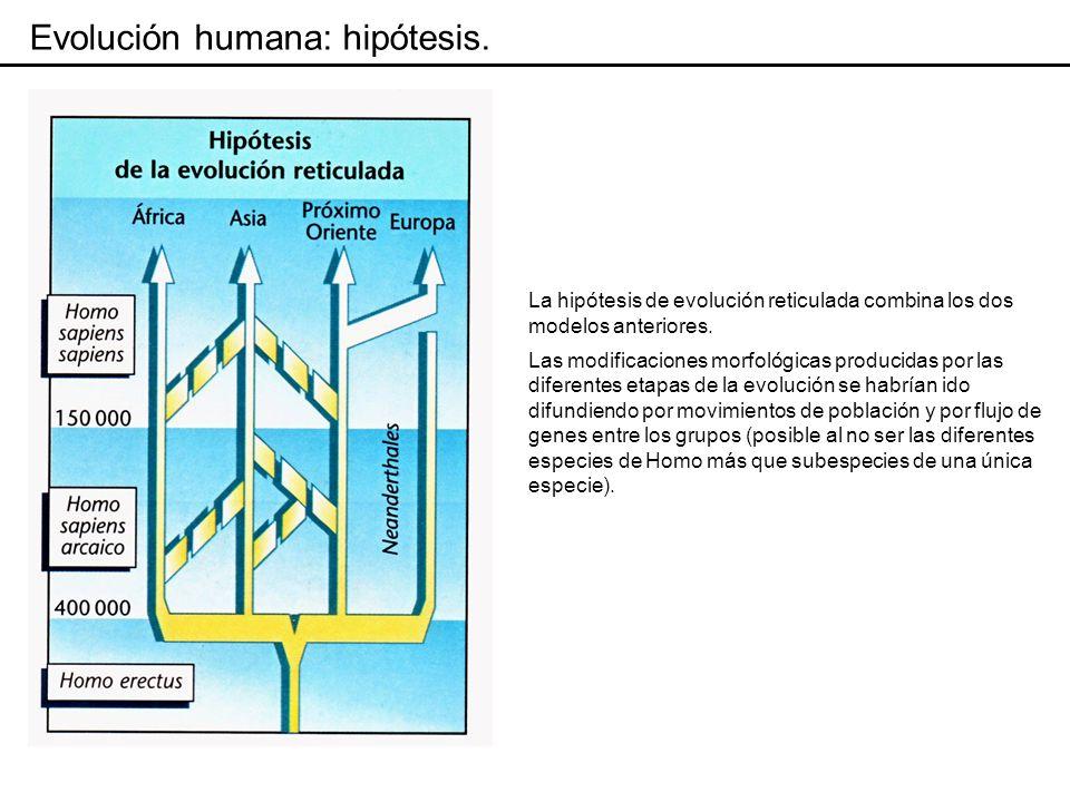 Evolución humana: Homo sapiens.