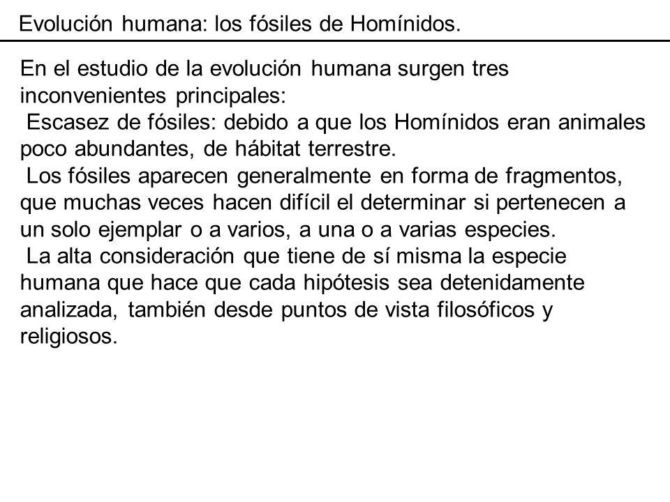 Evolución humana: los primeros homínidos.