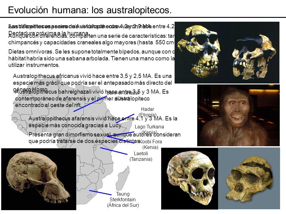 En 1974, Donald Johanson descubrió en Hadar a orillas del Awash (Etiopía) un esqueleto muy completo de hominido de locomoción parcialmente bípeda de 3,2 MA de antigüedad, al que se bautizó Lucy.