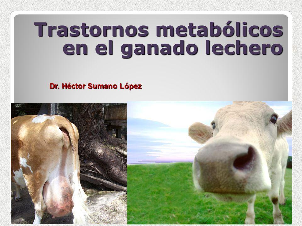 Trastornos metabólicos en el ganado lechero Dr. Héctor Sumano López