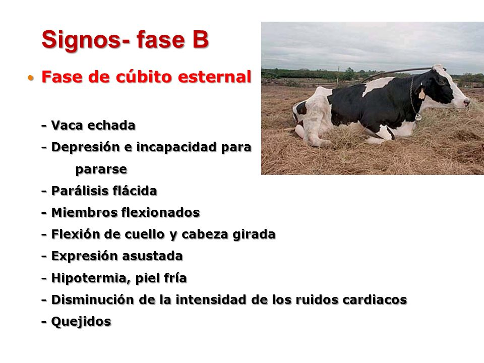 Fase de cúbito esternal Fase de cúbito esternal - Vaca echada - Depresión e incapacidad para pararse - Parálisis flácida - Miembros flexionados - Flex