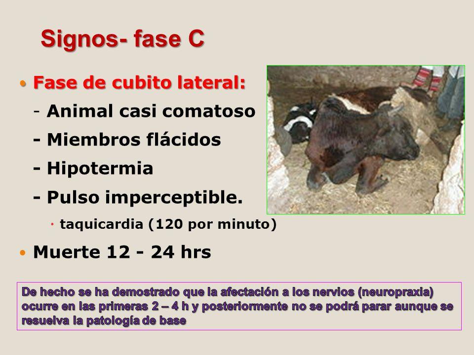 Fase de cubito lateral: Fase de cubito lateral: - Animal casi comatoso - Miembros flácidos - Hipotermia - Pulso imperceptible. taquicardia (120 por mi