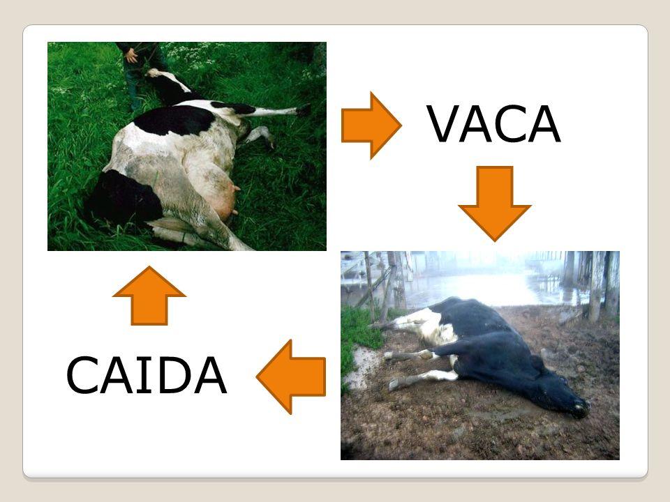 VACA CAIDA