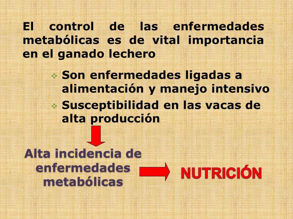 Alta incidencia de enfermedades metabólicas El control de las enfermedades metabólicas es de vital importancia en el ganado lechero Son enfermedades l