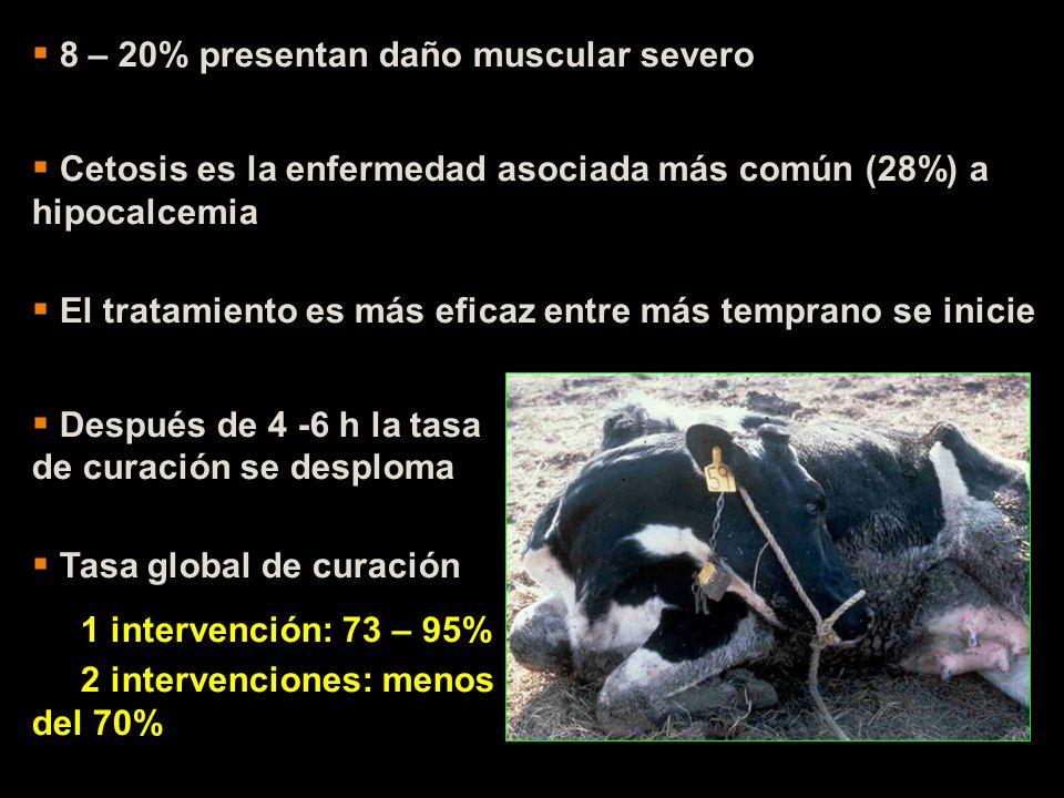 8 – 20% presentan daño muscular severo Cetosis es la enfermedad asociada más común (28%) a hipocalcemia El tratamiento es más eficaz entre más tempran