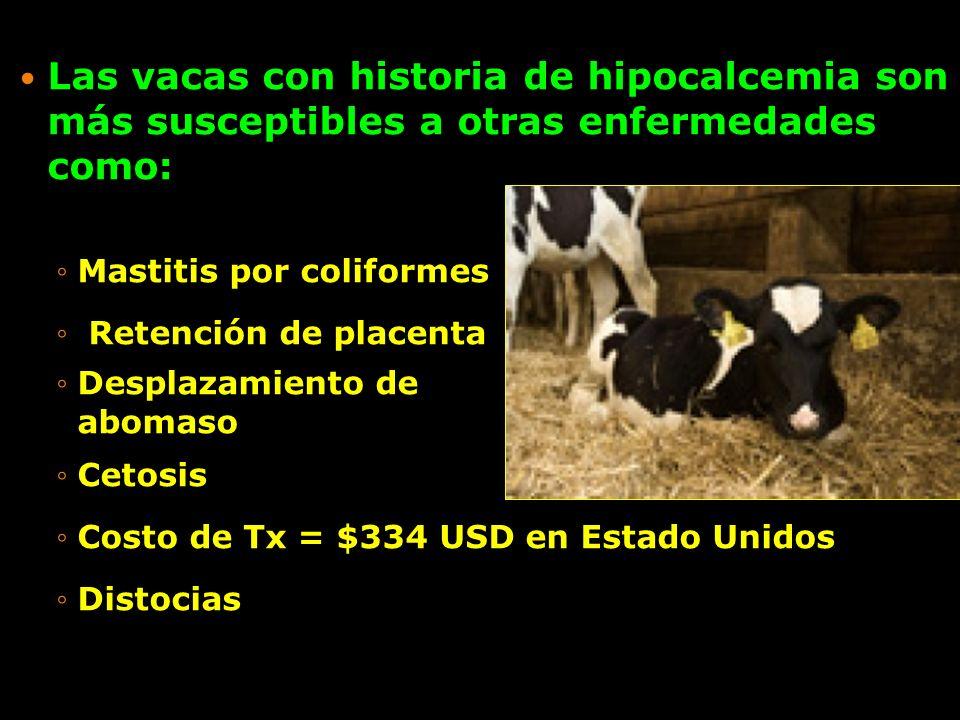 Las vacas con historia de hipocalcemia son más susceptibles a otras enfermedades como: Mastitis por coliformesMastitis por coliformes Retención de pla