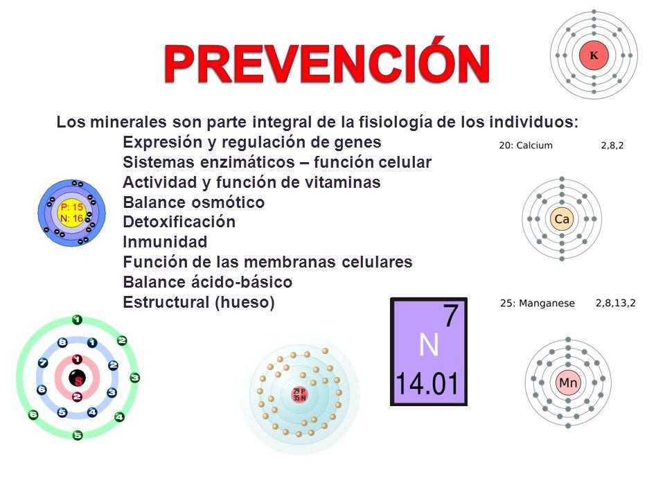 Los minerales son parte integral de la fisiología de los individuos: Expresión y regulación de genes Sistemas enzimáticos – función celular Actividad