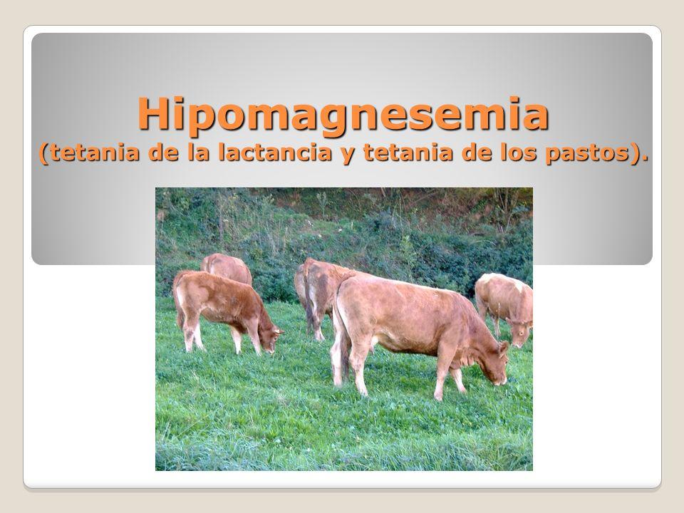 Hipomagnesemia (tetania de la lactancia y tetania de los pastos).
