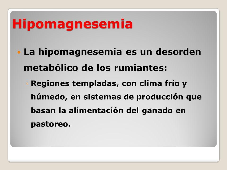 Hipomagnesemia La hipomagnesemia es un desorden metabólico de los rumiantes: Regiones templadas, con clima frío y húmedo, en sistemas de producción qu