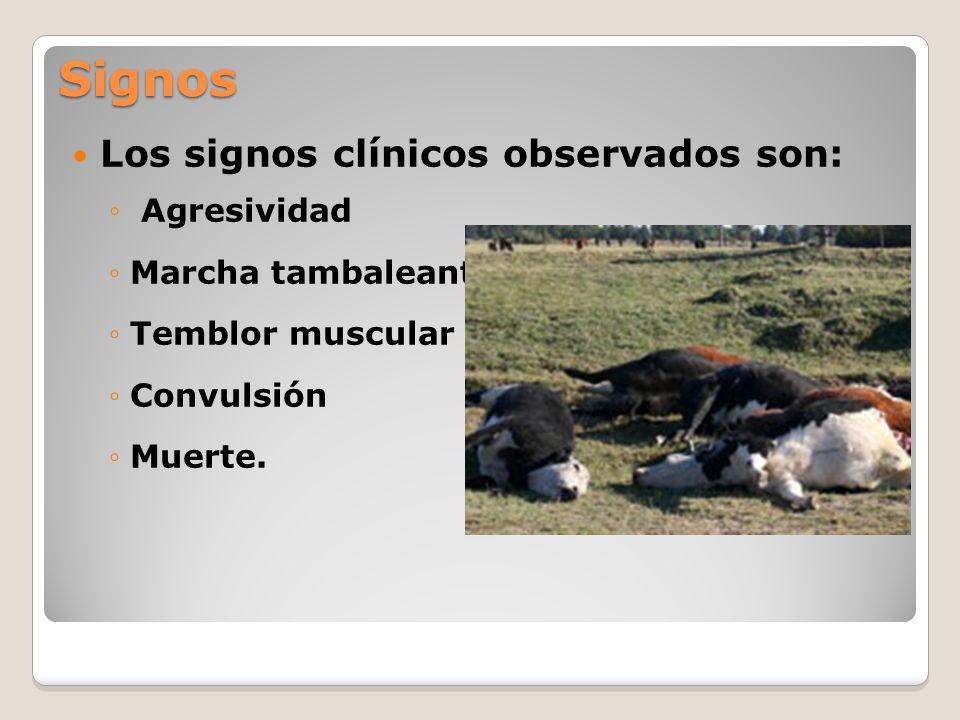 Signos Los signos clínicos observados son: Agresividad Marcha tambaleante Temblor muscular Convulsión Muerte.