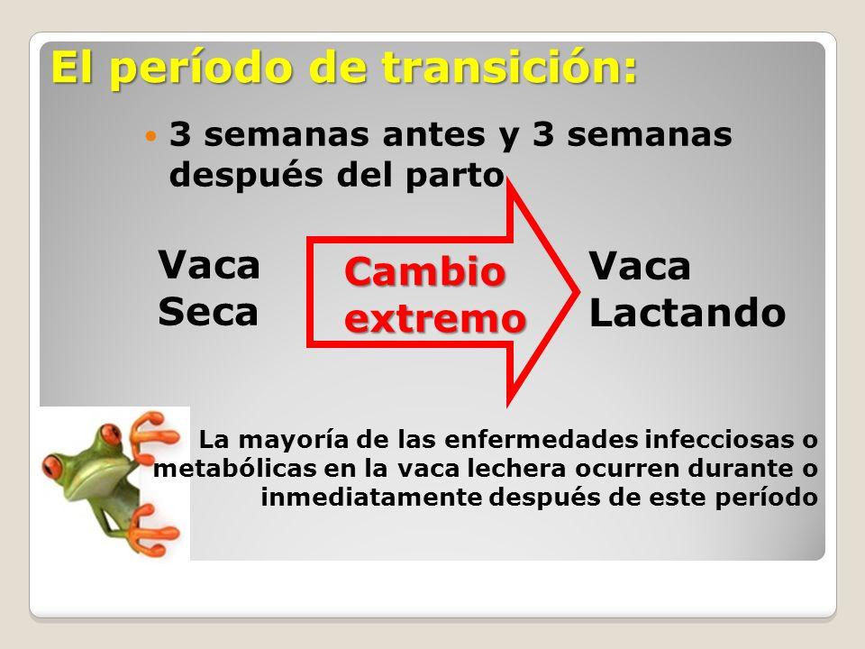 El período de transición: 3 semanas antes y 3 semanas después del parto Vaca Seca Vaca Lactando Cambio extremo La mayoría de las enfermedades infeccio