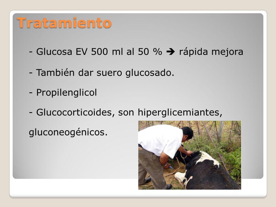 Tratamiento - Glucosa EV 500 ml al 50 % rápida mejora - También dar suero glucosado. - Propilenglicol - Glucocorticoides, son hiperglicemiantes, gluco