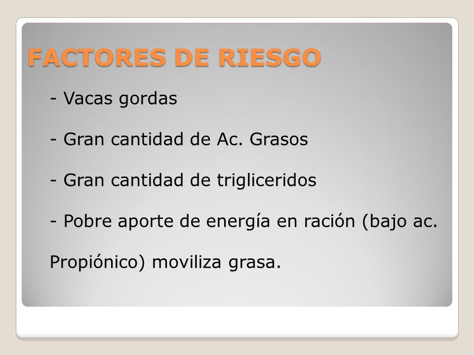 FACTORES DE RIESGO - Vacas gordas - Gran cantidad de Ac. Grasos - Gran cantidad de trigliceridos - Pobre aporte de energía en ración (bajo ac. Propión