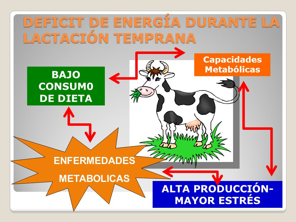 BAJO CONSUM0 DE DIETA DEFICIT DE ENERGÍA DURANTE LA LACTACIÓN TEMPRANA ALTA PRODUCCIÓN- MAYOR ESTRÉS Capacidades Metabólicas ENFERMEDADES METABOLICAS