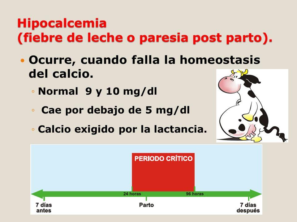 Ocurre, cuando falla la homeostasis del calcio. Normal 9 y 10 mg/dl Cae por debajo de 5 mg/dl Calcio exigido por la lactancia.