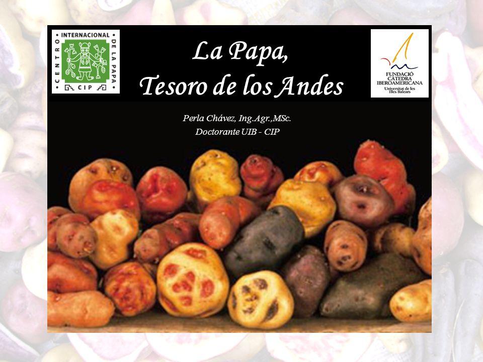 La Papa, Tesoro de los Andes Perla Chávez, Ing.Agr.,MSc. Doctorante UIB - CIP
