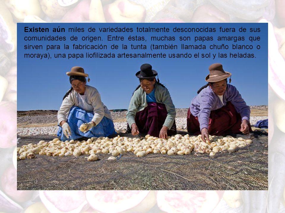 Existen aún miles de variedades totalmente desconocidas fuera de sus comunidades de origen. Entre éstas, muchas son papas amargas que sirven para la f