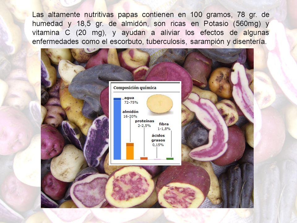 Las altamente nutritivas papas contienen en 100 gramos, 78 gr. de humedad y 18,5 gr. de almidón, son ricas en Potasio (560mg) y vitamina C (20 mg), y