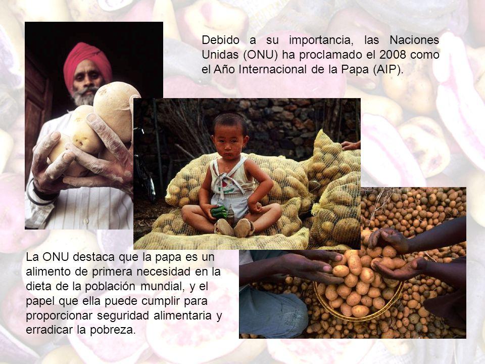 Debido a su importancia, las Naciones Unidas (ONU) ha proclamado el 2008 como el Año Internacional de la Papa (AIP). La ONU destaca que la papa es un
