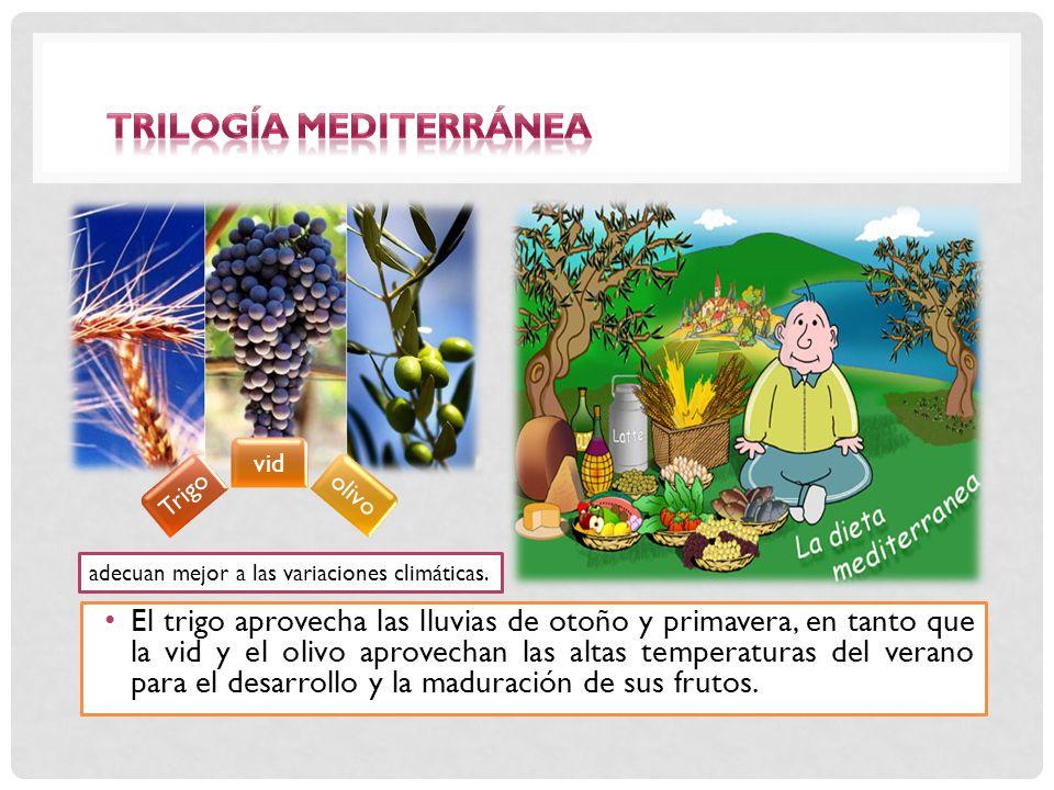 El trigo aprovecha las lluvias de otoño y primavera, en tanto que la vid y el olivo aprovechan las altas temperaturas del verano para el desarrollo y