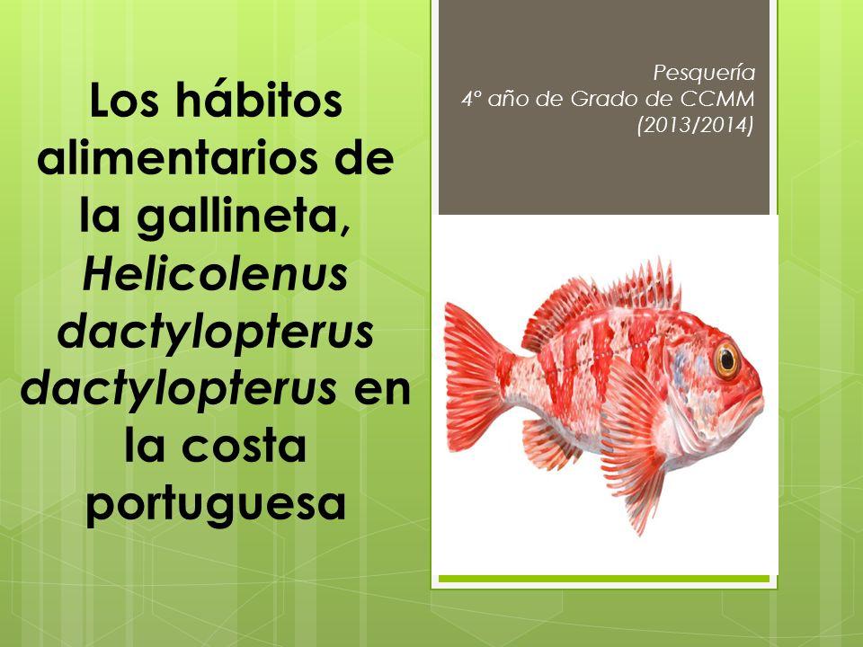 Pesquería 4º año de Grado de CCMM (2013/2014) Los hábitos alimentarios de la gallineta, Helicolenus dactylopterus dactylopterus en la costa portuguesa