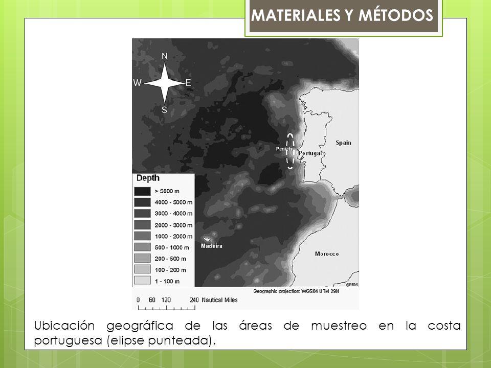 MATERIALES Y MÉTODOS Ubicación geográfica de las áreas de muestreo en la costa portuguesa (elipse punteada).
