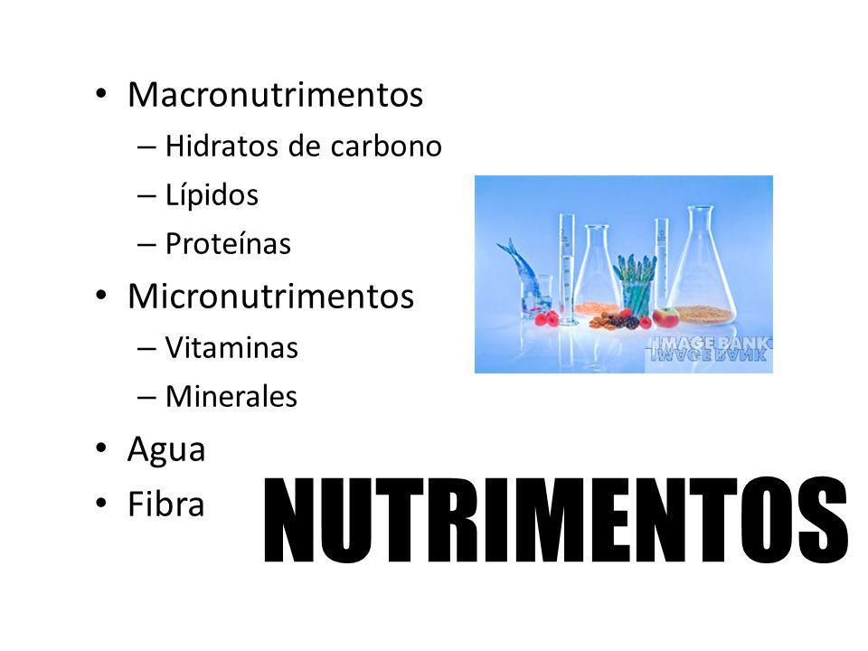 NUTRIMENTOS Macronutrimentos – Hidratos de carbono – Lípidos – Proteínas Micronutrimentos – Vitaminas – Minerales Agua Fibra