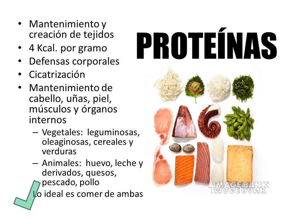 Mantenimiento y creación de tejidos 4 Kcal. por gramo Defensas corporales Cicatrización Mantenimiento de cabello, uñas, piel, músculos y órganos inter