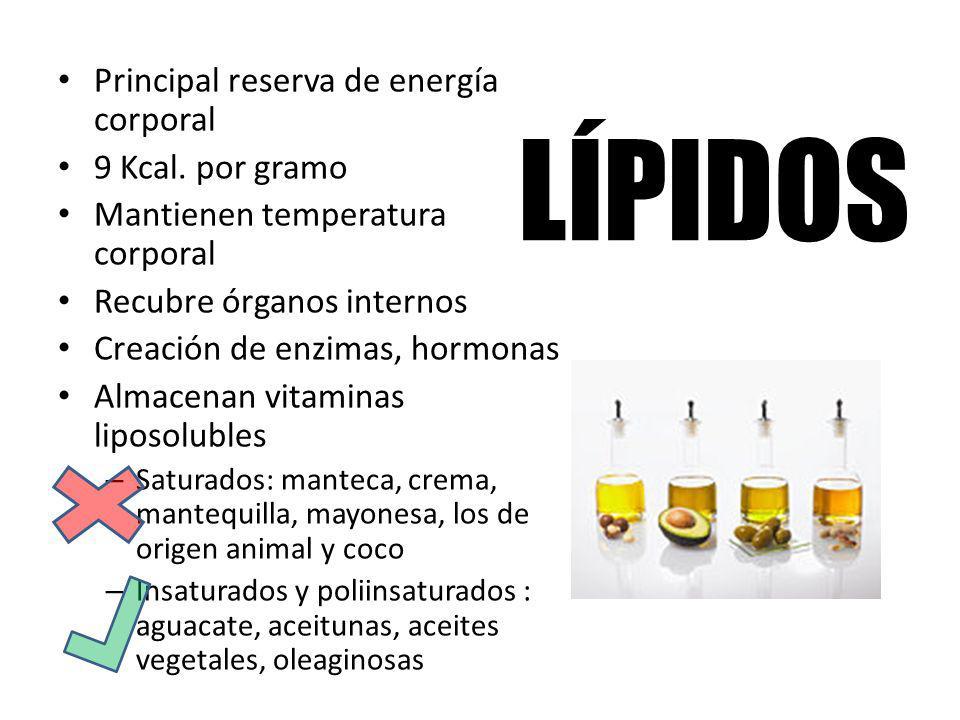 LÍPIDOS Principal reserva de energía corporal 9 Kcal. por gramo Mantienen temperatura corporal Recubre órganos internos Creación de enzimas, hormonas