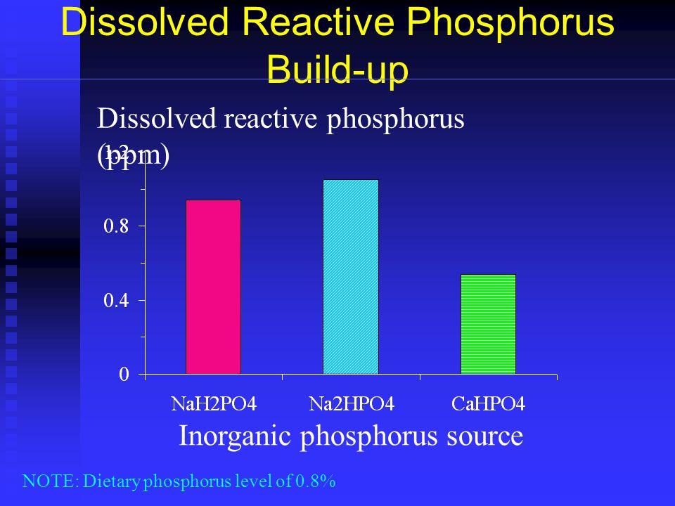 Dissolved Reactive Phosphorus Build-up Dissolved reactive phosphorus (ppm) NOTE: Dietary phosphorus level of 0.8% Inorganic phosphorus source