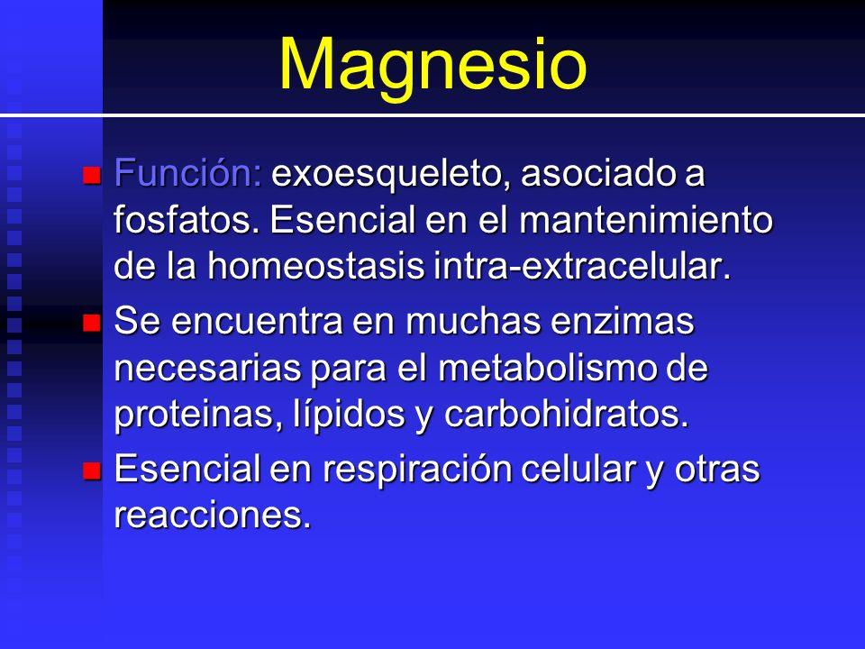 Magnesio Función: exoesqueleto, asociado a fosfatos. Esencial en el mantenimiento de la homeostasis intra-extracelular. Función: exoesqueleto, asociad